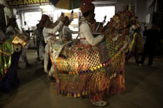 Inde - cheval Marwari - 17