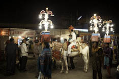 Inde - cheval Marwari - 57