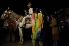 Inde - cheval Marwari - 60